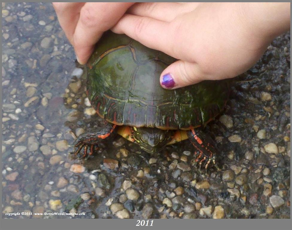 Emily_Daniel_hands_turtle_closeup_bord_textMed.jpg